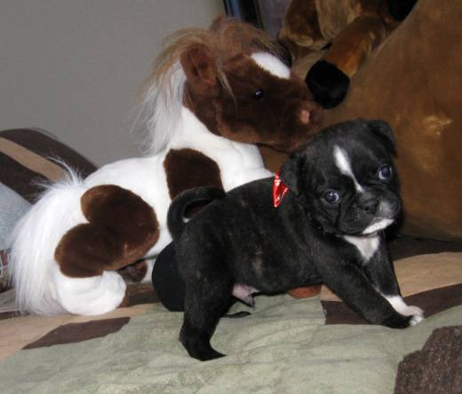 Frug Puppy Chaos