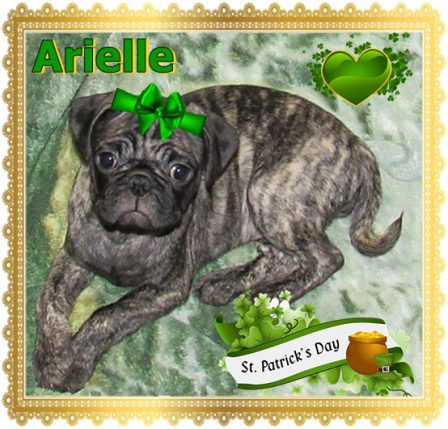 Arielle says Happy St. Patrick's Day - Brindle Pug Puppies | Do not make the mistake of treating your dogs like humans or they will treat you like dogs.