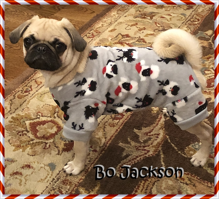 Check out my pug jammies!