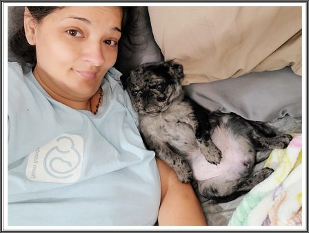 Waking up from a nice nap with my mom! - Merle Pug Puppies | If I have any beliefs about immortality, it is that certain dogs I have known will go to heaven, and very, very few persons.