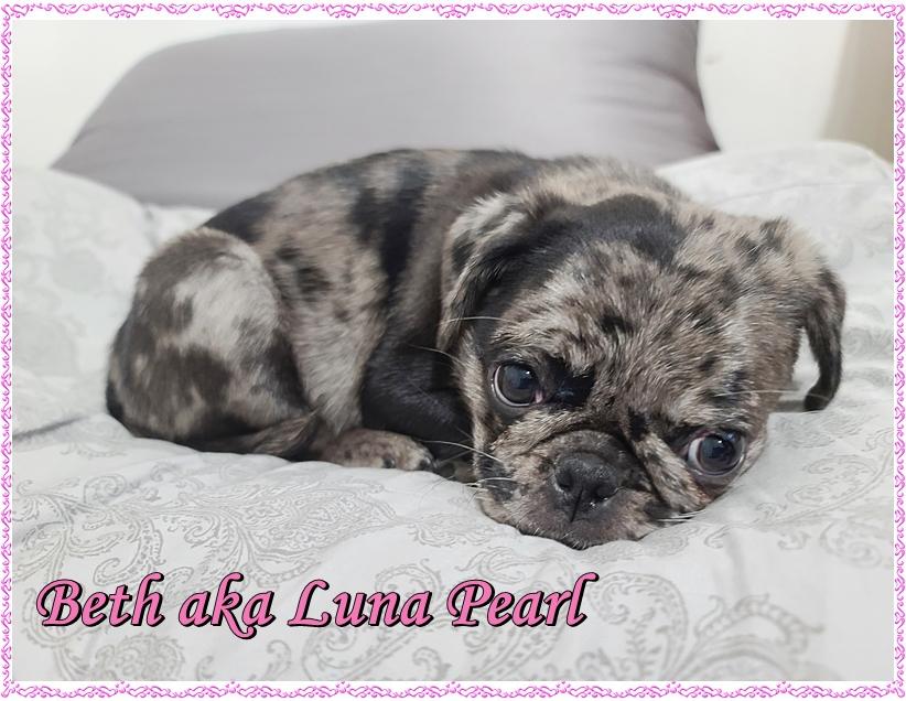 Lady Blue's Beth aka Luna Pearl