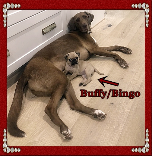 Everybody and everything loves Buffy/Bingo!
