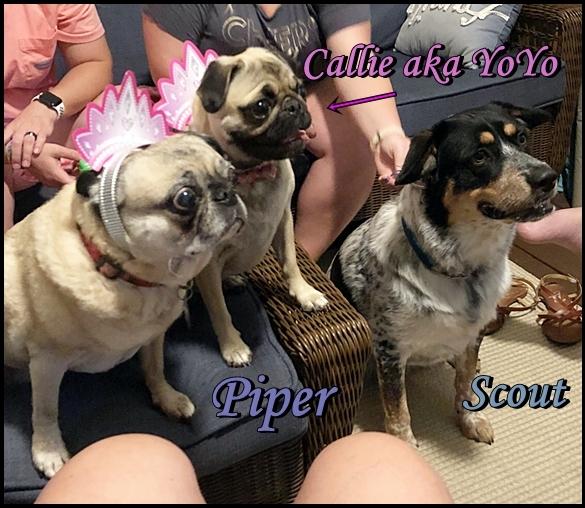 Phoebe's/George's Callie/YoYo celebrating her 1st B-day