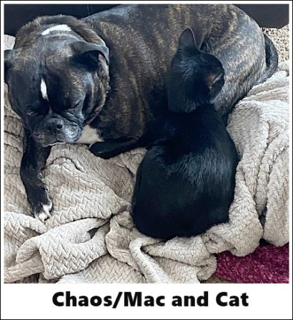 Yes, I like kitty cats! - Adult Brindle Pug | No Matter how little money and how few possessions you own, having a dog makes you rich.