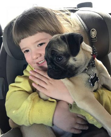 Puppy Love! - Fawn Pug Puppies | A dog is one of the remaining reasons why some people can be persuaded to go for a walk.