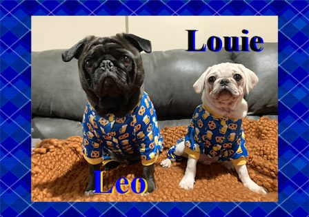 Leo and Louie - Multiple Color Pugs - Puppies and Adults | If I have any beliefs about immortality, it is that certain dogs I have known will go to heaven, and very, very few persons.