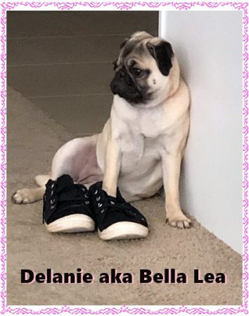 Walk a mile in my shoes! - Fawn Pug Puppies | A dog will teach you unconditional love, if you can have that in your life, things won't be too bad.