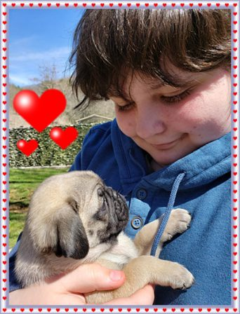 The best picture ever of a boy and his dog! - Fawn Pug Puppies | The one absolutely unselfish friend that man can have in this selfish world, the one that never deserts him, the one that never proves ungrateful or treacherous, is his dog.