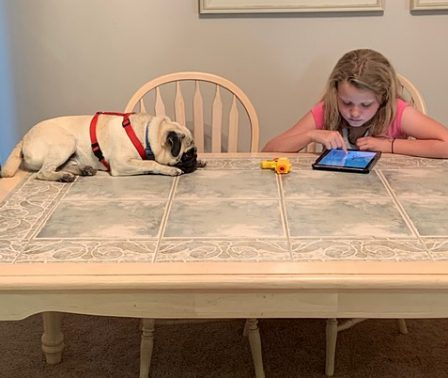 Do you get to lay on the table and watch your girl? - Fawn Pug Puppies | Petting, scratching, and cuddling a dog could be as soothing to the mind and heart as deep meditation and almost as good for the soul as prayer.