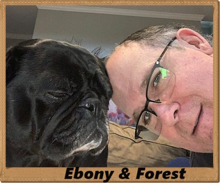 Ebony loves her new dad Forest - Adult Black Pug | The dog is a gentleman; I hope to go to his heaven not man's.