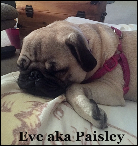 Dennis & Darla's very own Paisley living the good life!