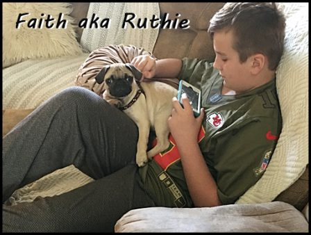 Scratching Ruthie's head while connecting with the world! - Fawn Pug Puppies | I think we are drawn to dogs because they are the uninhibited creatures we might be if we weren't certain we knew better.