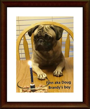 Doug's 1st Birthday - Adult Fawn Pug | Every boy who has a dog should also have a mother, so the dog can be fed regularly.