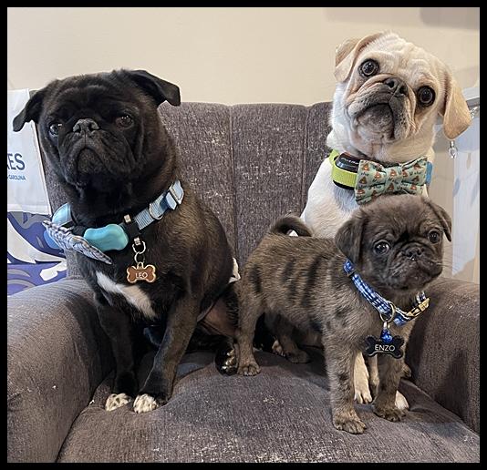 The three amigos Leo, Louie, and Enzo