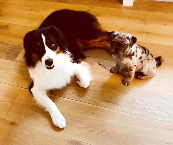 Lady Blue's Hal has a new friend