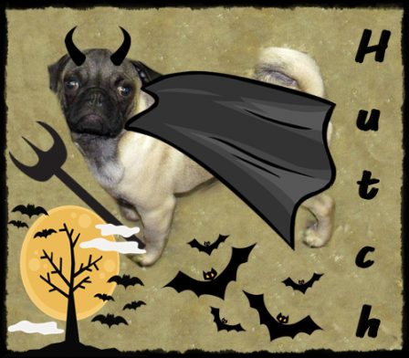 Halloween Hutch - Fawn Pug Puppies | Old dogs, like old shoes, are comfortable. They might be a bit out of shape and a little worn around the edges, but they fit well.