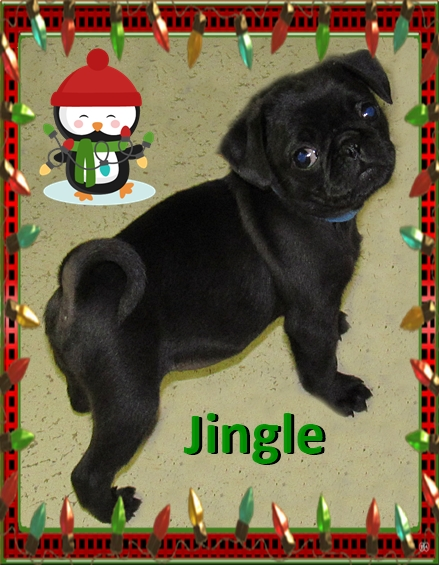 Jingle wants to know if you are ready for Christmas?