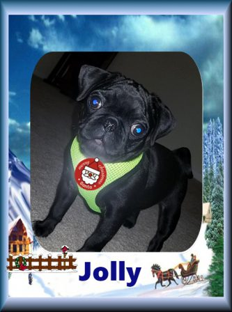 Jolly is a happy member of The Lynk Family - Black Pug Puppies | Every boy who has a dog should also have a mother, so the dog can be fed regularly.