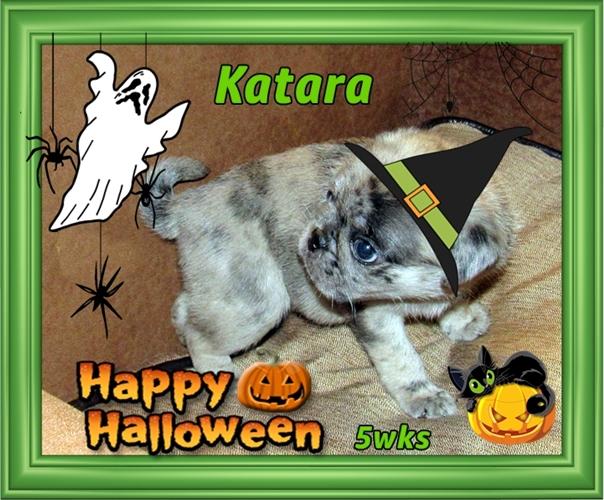 "Katara says ""I ain't afraid of no ghost""!"