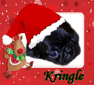 Cutest Kringle I ever did see! - Black Pug Puppies | I've seen a look in dogs' eyes, a quickly vanishing look of amazed contempt, and I am convinced that basically dogs think humans are nuts.