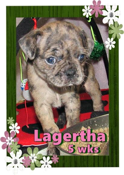April & Mu's bugg puppy Lagertha