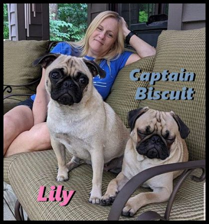 The Yancy's fur babies from Blue Ridge Pugs - Adult Fawn Pug | Don't accept your dog's admiration as conclusive evidence that you are wonderful.