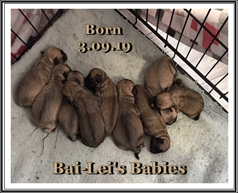 Can you believe it – NINE puppies!