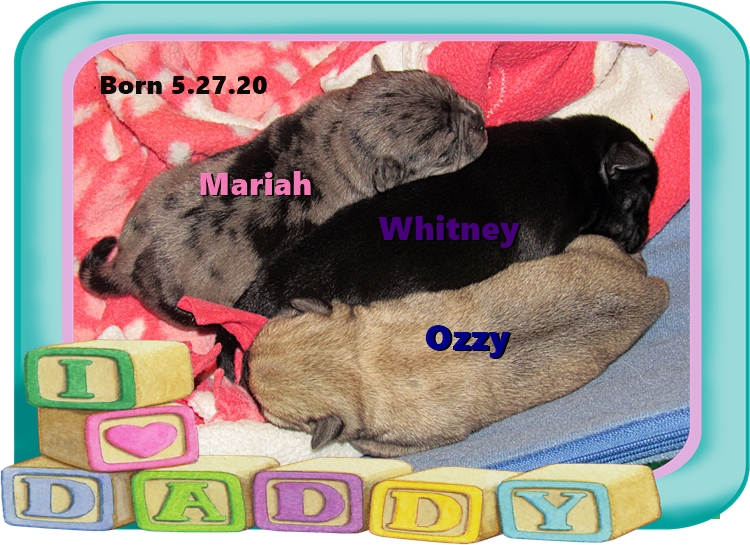 Brenna's three babies and all different colors!