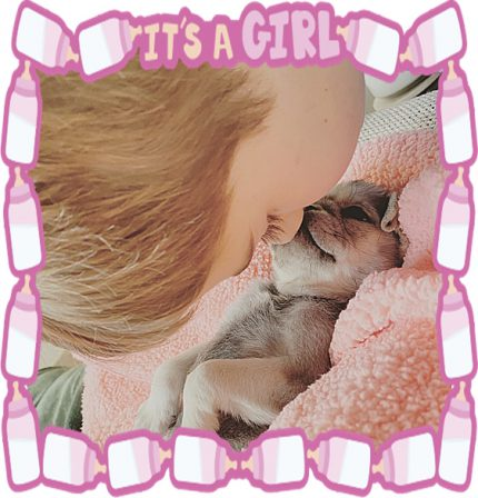Pug hugs and kisses! - Multiple Color Pugs Puppies | The great pleasure of a dog is that you may make a fool of yourself with him and not only will he not scold you, but he will make a fool of himself too.