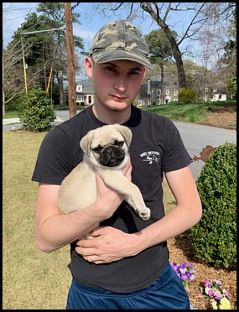 """Jack and the """"Bean"""" stalk! - Fawn Pug Puppies 