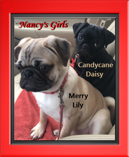 Day and Night Beauties from Blue Ridge Pugs