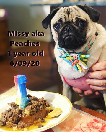 Look at what my mom made me for my birthday . . . yum yum yum! - Adult Fawn Pug | If you pick up a starving dog and make him prosperous he will not bite you. This is the principal difference between a dog and man.