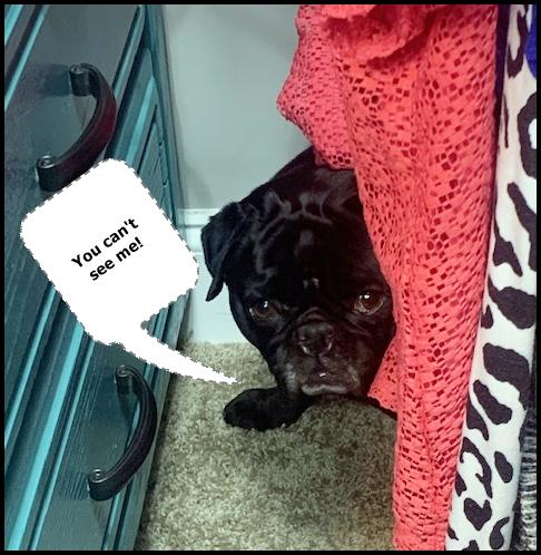 Ebony loves playing hide n' seek with Kim