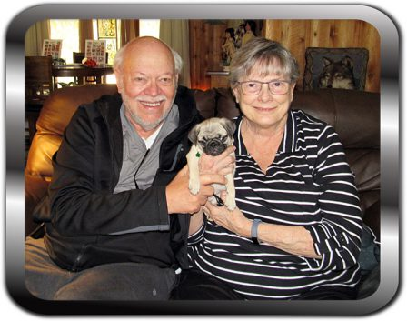 Paige/Molly with her new mom and dad - Fawn Pug Puppies | If a dog will not come to you after having looked you in the face, you should go home and examine your conscience.