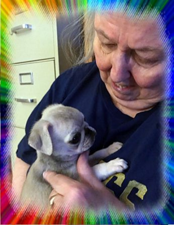 Linda adores her new little chinchilla girl Piama - Multiple Color Pugs Puppies | If there are no dogs in Heaven, then when I die I want to go where they went.