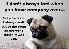 Do Pugs Fart? - Adult Fawn Pug | A dog is one of the remaining reasons why some people can be persuaded to go for a walk.