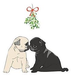 Pug puppies under the mistletoe