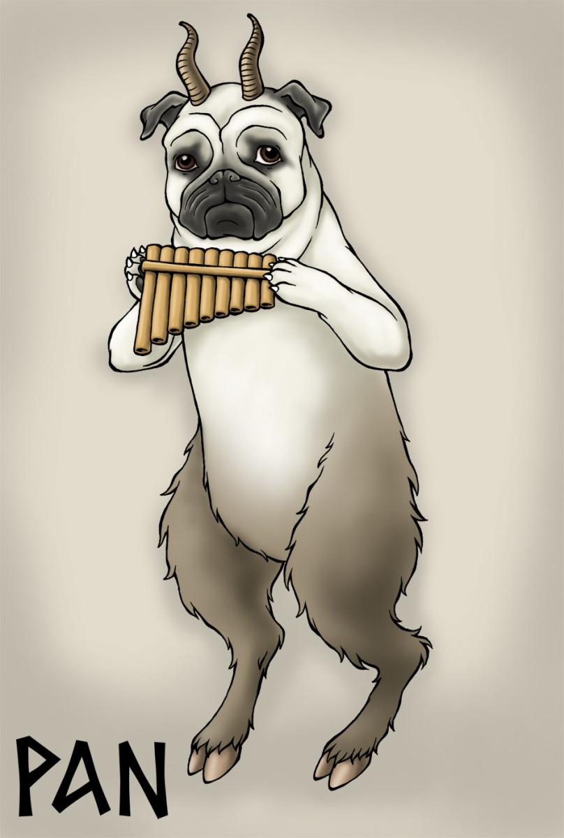 Pan the Pug – LOL!