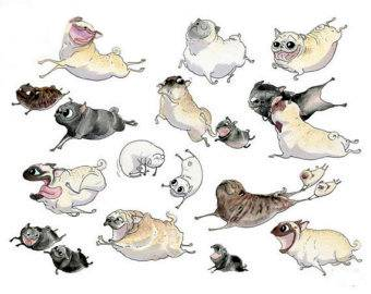 Pugs come in many colors