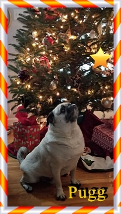 Pugg sees the Star of Bethleham