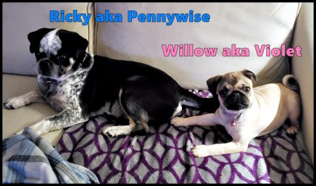 Puddin's Willow/Violet and BRP's Ricky/Pennywise - Multiple Color Pugs Puppies | Once you have had a wonderful dog, a life without one is a life diminished.