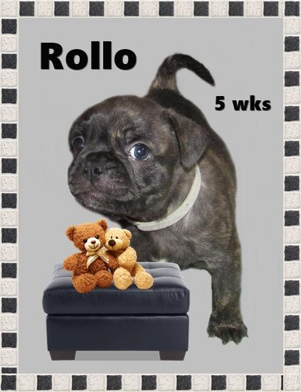 April & Mu's bugg puppy Rollo