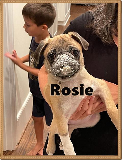 Scarlett/Rosie was naughty and got in mom's flour bin