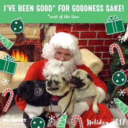 Frodo, Kira, and Bilbo hope you had a Merry Christmas - Multiple Color Pugs - Puppies and Adults | Outside of a dog, a book is man's best friend - inside of a dog it's too dark to read.