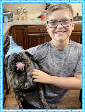 That cake was very yummy! - Adult Brindle Pug | Even the tiniest dog is lionhearted, ready to do anything to defend home and family.