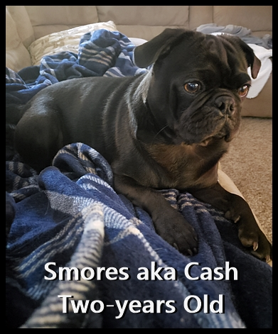 What a handsome boy Ebony's Smores/Cash turned out to be!