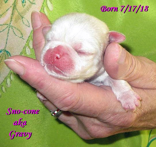 Snow's & Sterling's Sno-cone aka Gravy