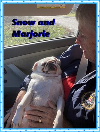 Snow on the way to her new home - Adult White Pug | No one appreciates the very special genius of your conversation as the dog does.