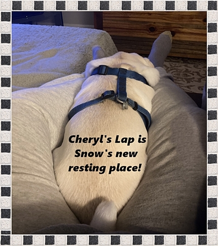 Snow is quite content in Cheryl's lap