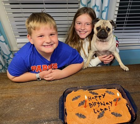 Brandy's Tammy/Luna celebrating her 2nd birthday - Adult Fawn Pug | If you don't own a dog, at least one, there is not necessarily anything wrong with you, but there may be something wrong with your life.